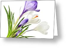 Spring Crocus Flowers Greeting Card