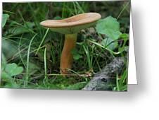 Spring Mushroom Greeting Card