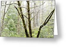 Spring Snow Along Williams River Scenic Byway Greeting Card
