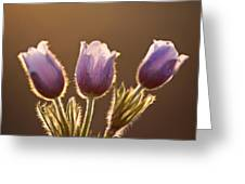 Spring Time Crocus Flower Greeting Card