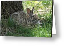Spring Time Rabbit Greeting Card