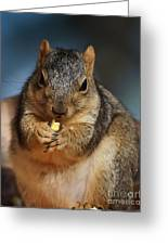 Squirrel Eating Corn Greeting Card