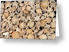Star Sand Foraminiferans Greeting Card