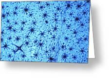 Stellate Leaf Hairs, Light Micrograph Greeting Card