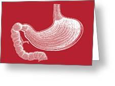 Stomach Anatomy Greeting Card