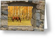 Stone Window View And Beautiful Horse Greeting Card
