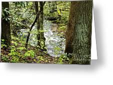 Stream Monongahela National Forest Greeting Card