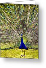 Sun King Greeting Card by David Lade
