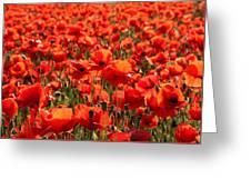 Sun Poppies Greeting Card