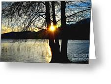 Sunlight Between The Trees Greeting Card