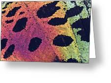 Sunset Moth Urania Ripheus Greeting Card