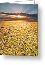 Sunset Wheat Greeting Card