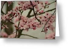 Sweet Spring Greeting Card