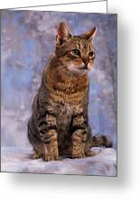 Tabby Cat Portrait Of A Cat Greeting Card