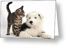 Tabby Kitten & Border Collie Greeting Card