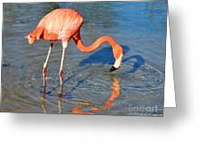 Taking A Drink Greeting Card