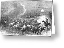 Texas: Cattle Drive, 1867 Greeting Card