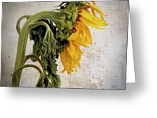 Textured Sunflower Greeting Card by Bernard Jaubert
