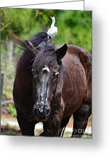 The Percheron The Egret And The Horsefly Greeting Card