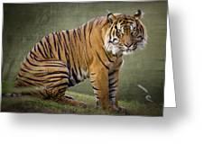 The Sumatran Tiger  Greeting Card