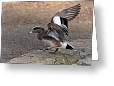 American Wigeon Waterfowl Greeting Card