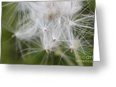 Thistle Seeds Greeting Card