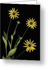 Three Yellow Flowers Greeting Card