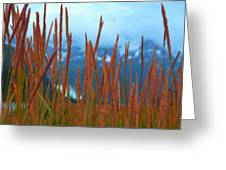 Through The Looking Grass  Greeting Card