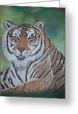 Tiger Greeting Card by Shadrach Ensor
