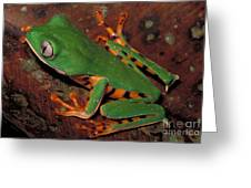 Tiger-striped Monkey Frog Greeting Card