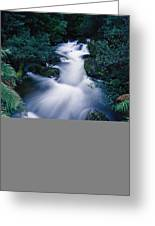 Time Lapse Of Taggerty River Flow Greeting Card