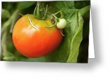 Tomato Greeting Card