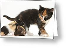 Tortoiseshell Kitten With Baby Greeting Card