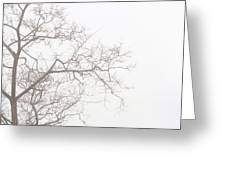 Tree Against A White Sky In The Early Morning Hours Greeting Card by Gal Ashkenazi