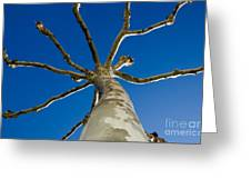 Tree With Branches Greeting Card