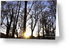 Trees With Sunlight Greeting Card