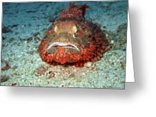 Tropical Fish Scorpionfish Greeting Card