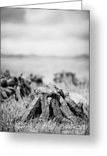 Turf Peat Stacked For Drying On The Bog In Ireland Greeting Card