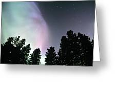 View Of Trees And Northern Lights Greeting Card
