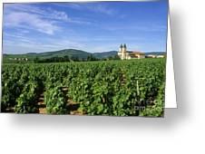 Vineyard. Regnie-durette. Beaujolais Wine Growing Area. Departement Rhone. Region Rhone-alpes. Franc Greeting Card