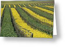 Vineyards In Californias Edna Valley Greeting Card