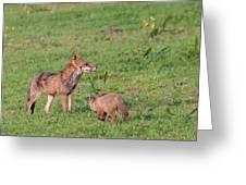 Vixen And Cub Greeting Card