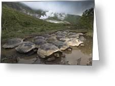 Volcan Alcedo Giant Tortoise Geochelone Greeting Card