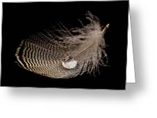 Wet Feather Greeting Card