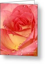 Wet Rose Greeting Card