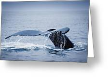 Whales Fluke Greeting Card