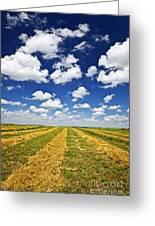 Wheat Farm Field At Harvest In Saskatchewan Greeting Card by Elena Elisseeva
