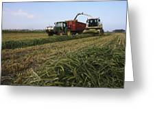 Wheat Harvest For Silage Greeting Card