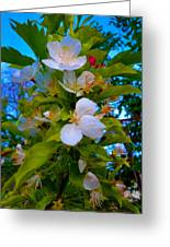 White Beauty Greeting Card by Sergio Aguayo