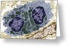 White Blood Cell, Tem Greeting Card